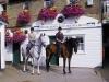 wimbledon-stables
