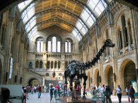 The Natural History Museum w Londynie