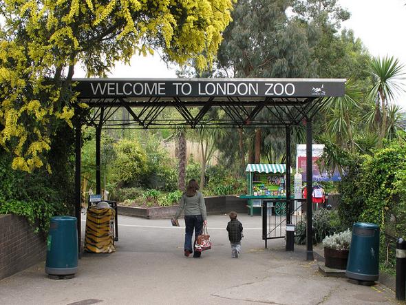 londyn zoo